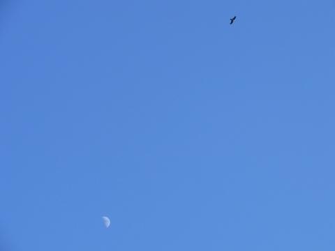 月とトビ3