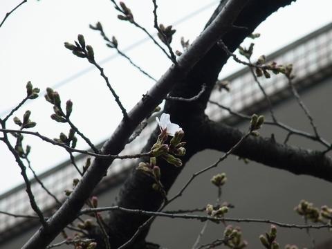 枝でも開花!