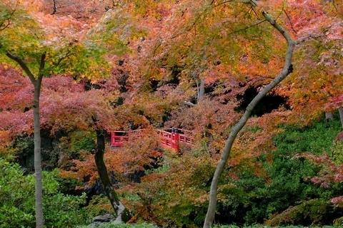 紅葉山庭園の紅葉3