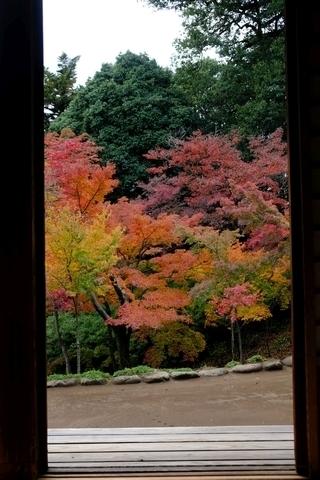 額縁の紅葉山庭園の紅葉2