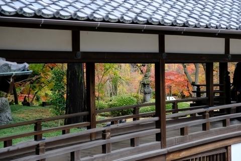 拝殿への渡り廊下と紅葉