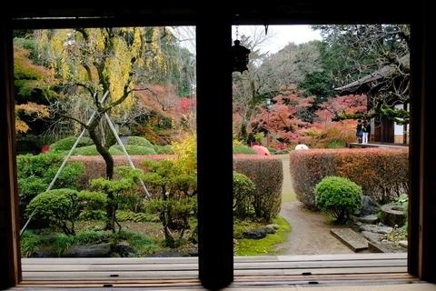 玄関越しの紅葉山庭園の紅葉4