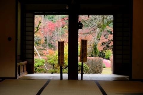 玄関越しの紅葉山庭園の紅葉3