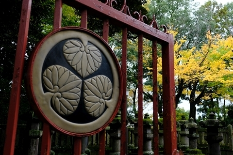 三葉葵の御紋と黄葉
