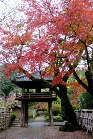 鐘突堂と紅葉