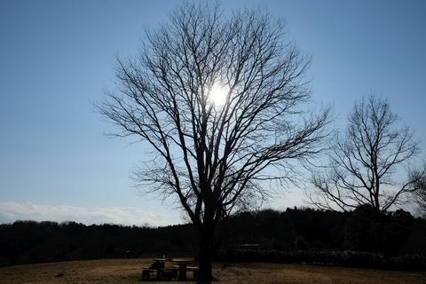 比良の丘のてっぺんの木