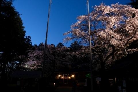 北野天神社夜桜あかり
