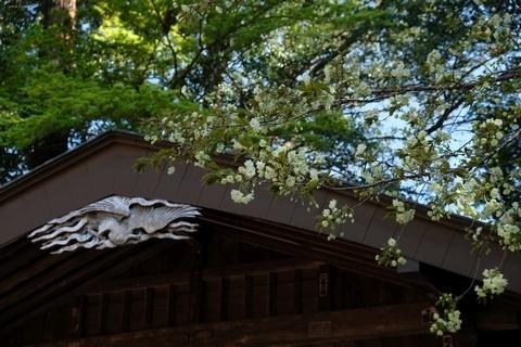 北野天神社の鬱金