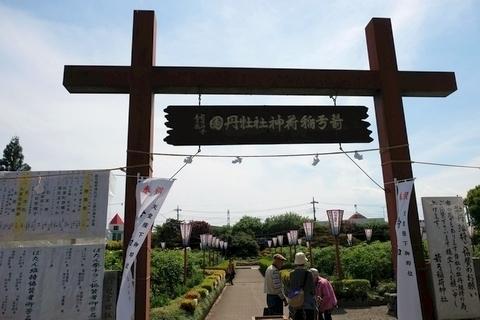 箭弓稲荷神社牡丹園
