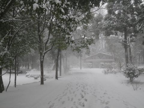 風に舞う雪