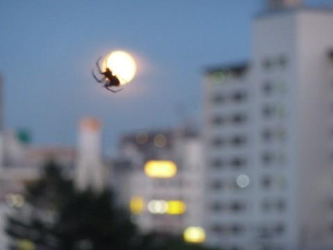 クモにとらえられた満月