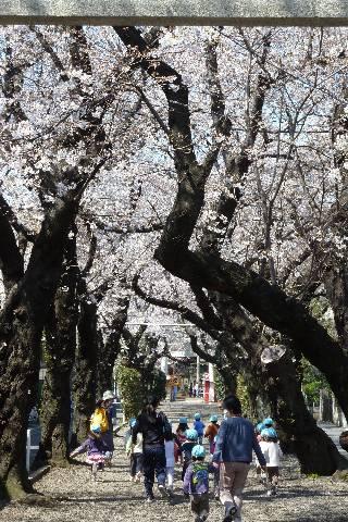 桜の下で賑やかな園児たち