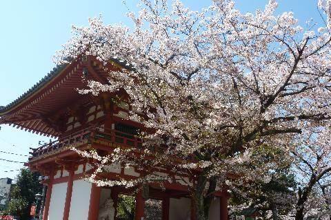目黒不動尊 仁王門と桜