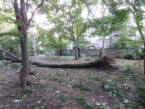 倒れた木1