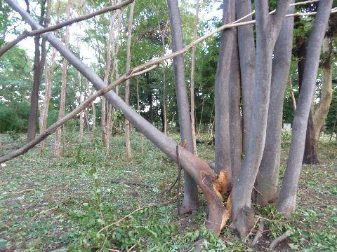 折れた木1