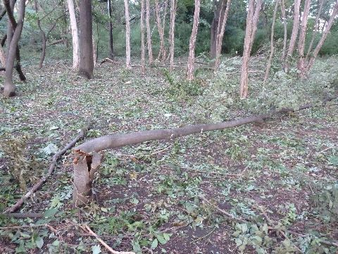折れた木2