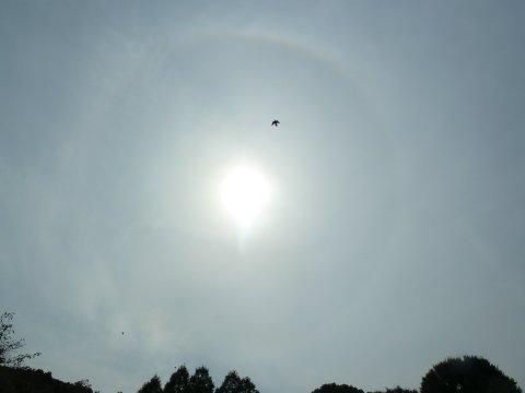 ハト舞う日輪