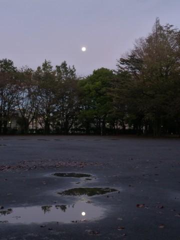 水たまりにも満月