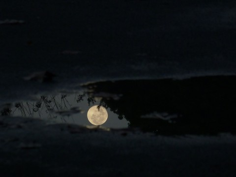 水たまりの満月の表情