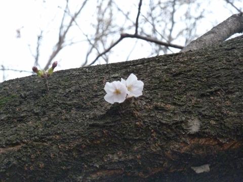 林試の森の桜