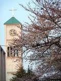 サレジオ教会とサクラ