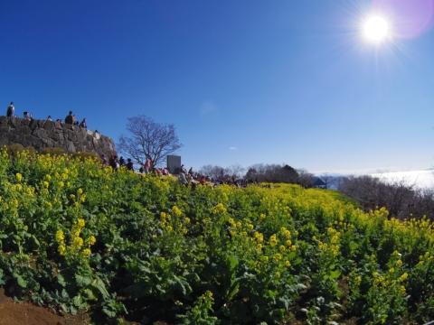菜の花と見晴台