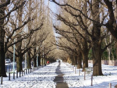 雪の絵画館前イチョウ並木