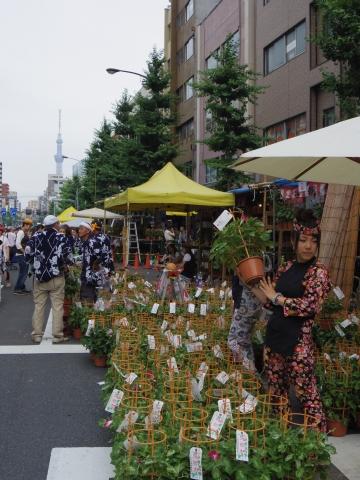 朝顔市と東京スカイツリー1