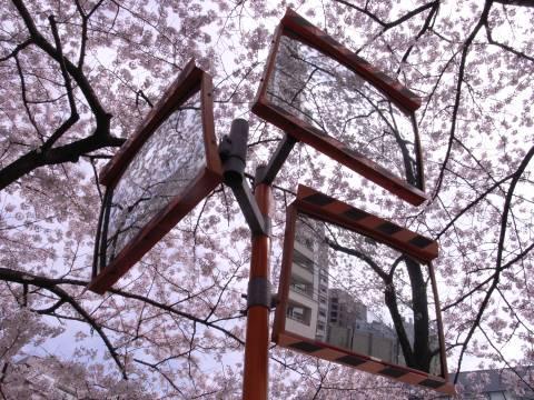 カーブミラーの中の桜の世界