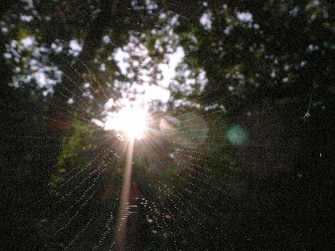 太陽を捕まえたクモの巣