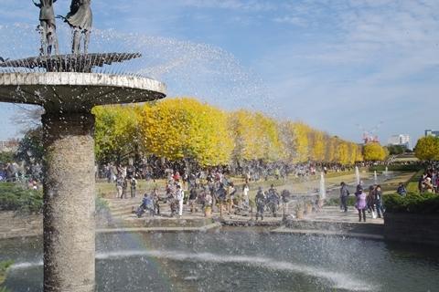 噴水の虹とイチョウ2.JPG