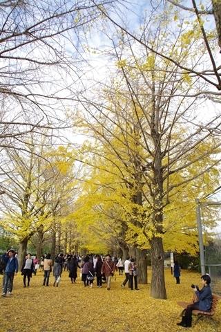 黄葉を楽しむ1