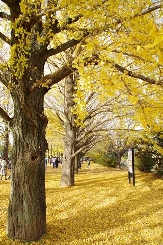 黄葉を楽しむ2