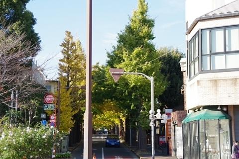 右のイチョウ並木
