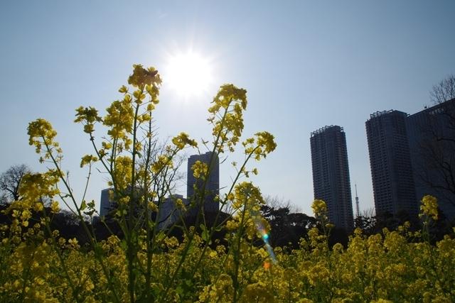 太陽と菜の花、そして東京タワー