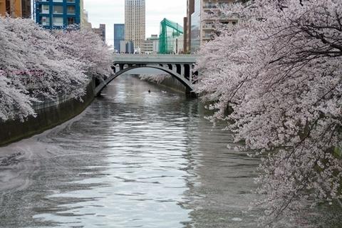 目黒川の桜・太鼓橋.JPG