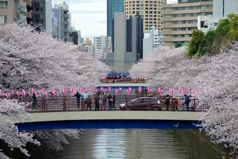 目黒川の桜・ふれあい橋から