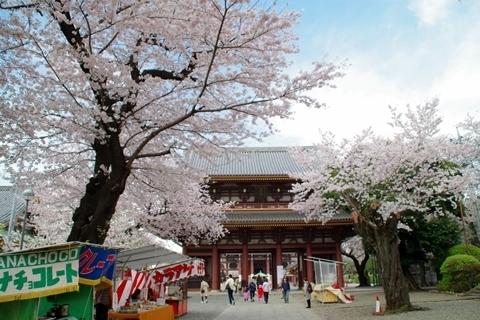 青空と桜と三門