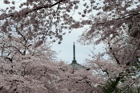 五重塔相輪と桜