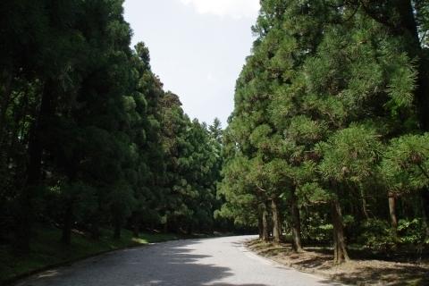北山杉の並木