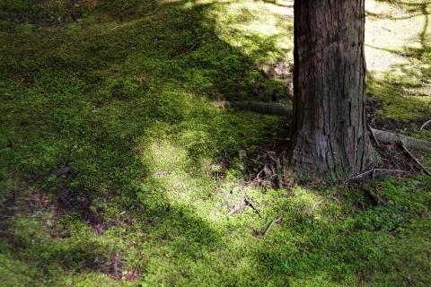 伝法院庭園・苔2