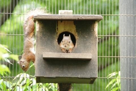 巣箱のリス