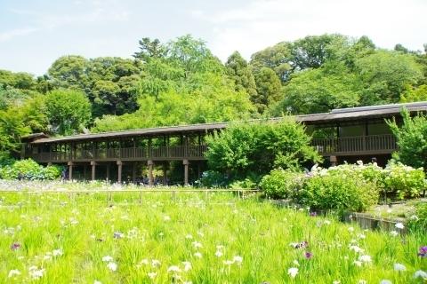 菖蒲池と渡り廊下