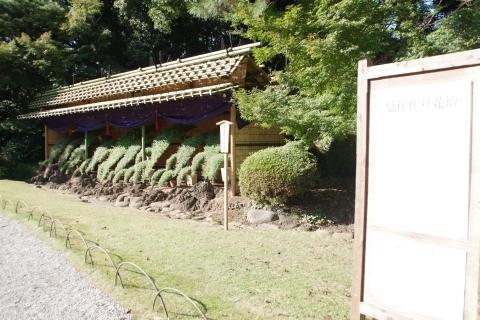 懸崖菊花壇