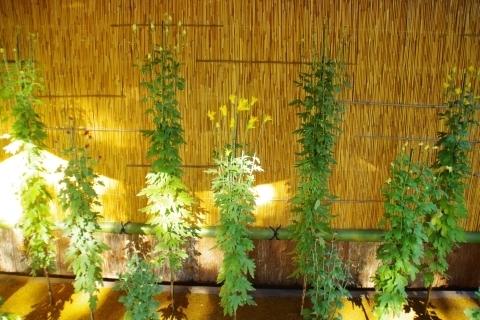 肥後菊花壇