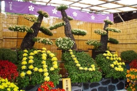 ゆしまの盆庭