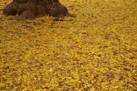 一面黄色い絨毯