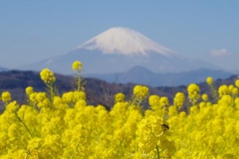 富士山より花
