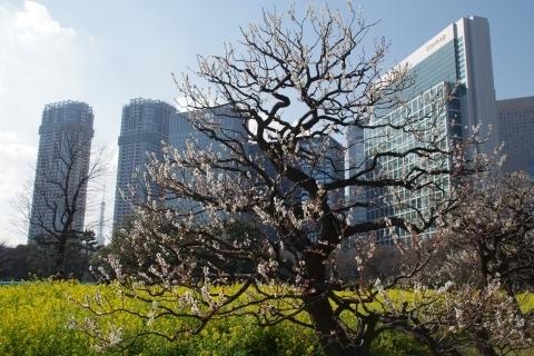 肩身狭そうな東京タワー