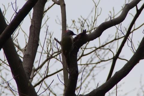 見慣れぬモヒカンの鳥